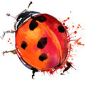 Ladybird Beetle T-shirt Graphi...