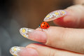 Ladybird in hand crawling on the fingers Stock Photos