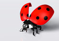 Ladybird with an open elytra closeup of a ladybug red black spots on a white background Stock Photography