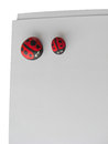 Ladybird painted on cobblestone on paper in isolated white background Royalty Free Stock Photo