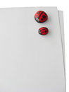 Ladybird painted on cobblestone on paper in isolated white background Stock Image