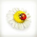 Ladybug and chamomile illustration on white background Stock Images