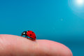 Ladybug on a finger woman under the sun Royalty Free Stock Photography