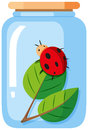 Ladybug in the glass jar Royalty Free Stock Photo