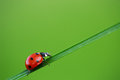 Ladybug on green grass and blue background Royalty Free Stock Photos
