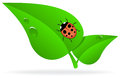 Ladybug on green leaf Stock Photo