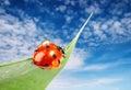 Ladybug on green leaf Stock Images
