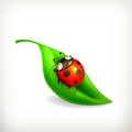 Ladybug on green leaf illustration white background Stock Photo