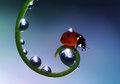 Ladybug the image of a sitting on a grass Royalty Free Stock Photos