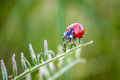 Ladybug lady bug on a grass Stock Images