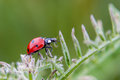 Ladybug lady bug on a plant Stock Images