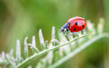 Ladybug lady bug on a plant Stock Photography