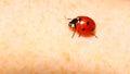 Ladybug ladybird on hand nature spring Royalty Free Stock Photo