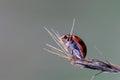 ladybug life Royalty Free Stock Photo