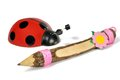 Ladybug and a pencil Royalty Free Stock Photo