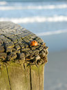 Ladybug on post at ocean Stock Images
