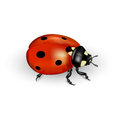 Ladybug realistic on a white background illustration Stock Photography