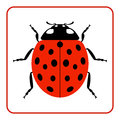 Ladybug red cartoon icon realistic Royalty Free Stock Photo