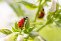 Ladybug resting on flower, Stock Photography