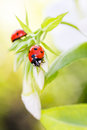 Ladybug resting on flower, Stock Photos