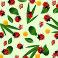 Ladybug seamless pattern Stock Photos