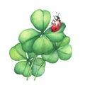 Ladybug sitting on a green four leaf clover.