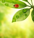 Ladybug sitting on a green leaf. Royalty Free Stock Photo