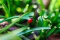 Ladybug small on green grass Royalty Free Stock Photos