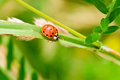 Ladybug summer resting on a plant Stock Images