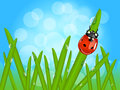 Ladybug on wet grass Royalty Free Stock Image