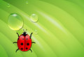 Ladybug on wet leaf vector grean eps transparency and gradient mesh used Royalty Free Stock Images