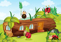 Ladybugs and a wood house illustration of in beautiful nature Stock Image
