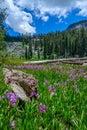 Laghi mosquito, parco nazionale della sequoia Fotografie Stock Libere da Diritti