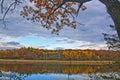 Lago grass nella caduta Immagine Stock Libera da Diritti
