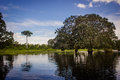 Lagoon near amazon river jungle tree Royalty Free Stock Photo