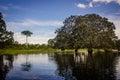 Lagoon near amazon river jungle tree Royalty Free Stock Photo