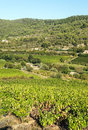 Lagrasse Vineyards Royalty Free Stock Photo