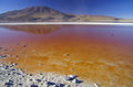 Laguna colorada in southern bolivia Stock Photography