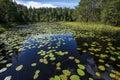 Lake with aquatic plants Royalty Free Stock Photo