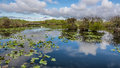 Lake and boardwalk in the everglades wetlands of national park florida Royalty Free Stock Image