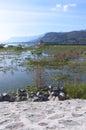 Lake Chapala Boats Birds Pier and Mountains Royalty Free Stock Photo