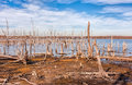 Lake and Dead Trees Royalty Free Stock Photo