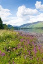 Lake District mountains and pink flowers Maiden Moor Derwent Water The Lakes National Park Cumbria uk Royalty Free Stock Photo