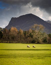 Lake district sheep united kingdom two eat green grass on agricultural land near buttermere in the of england cumbria with a fell Royalty Free Stock Photos