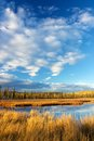 Lake with dry yellow grass near fairbanks high and blue sky clouds in autumn Royalty Free Stock Image