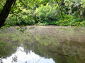 Lake In The Forest, Summer Nat...