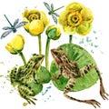 lake frog illustration. Royalty Free Stock Photo