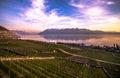 Lake geneva vineyards of the lavaux region over leman of Stock Image