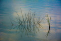 Lake grass reflections fresh water of on calm water Stock Photo