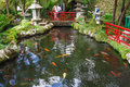 Lake with Koi fish in Tropical Garden Monte Palace, Madeira, Portugal Royalty Free Stock Photo